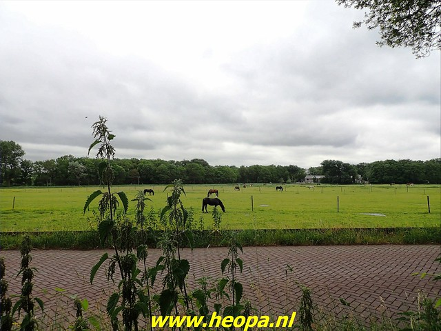 2021-06-19    Strand en  Duin tocht Overveen (96)