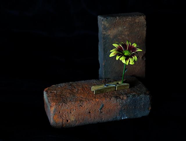 Flower anad bricks