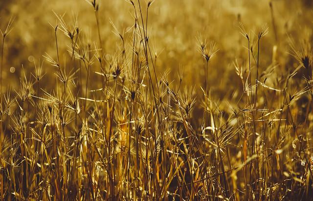 Spike fields
