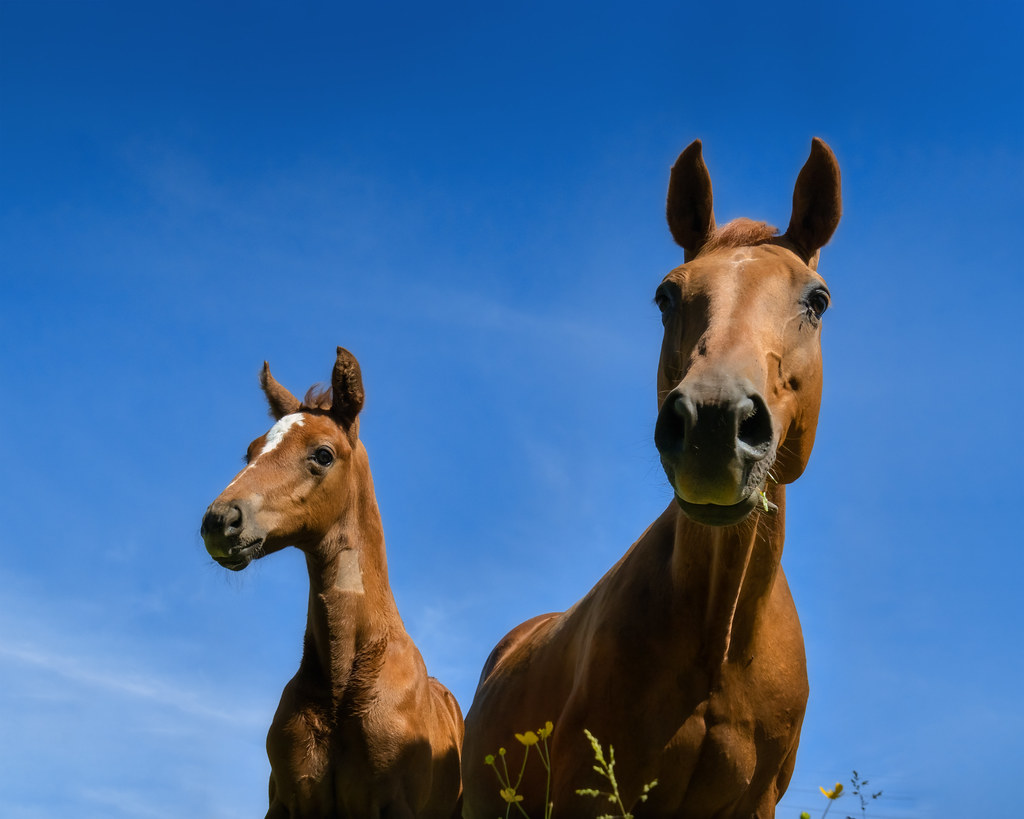 Mother and son on the pasture