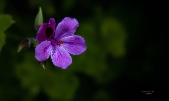 Flores y plantas 2020-687