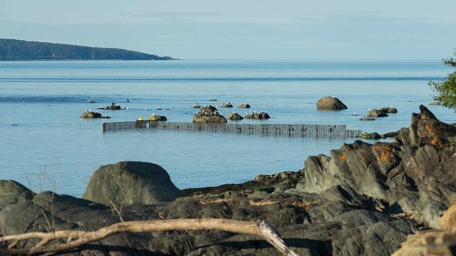 Fleuve Saint-Laurent, Ile aux Coudres, PQ, Canada - 06795