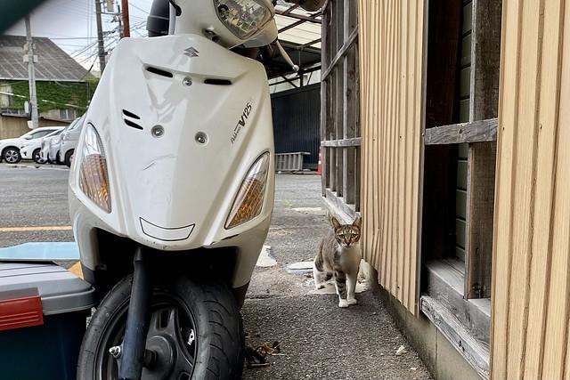 Today's Cat@2021−06−20