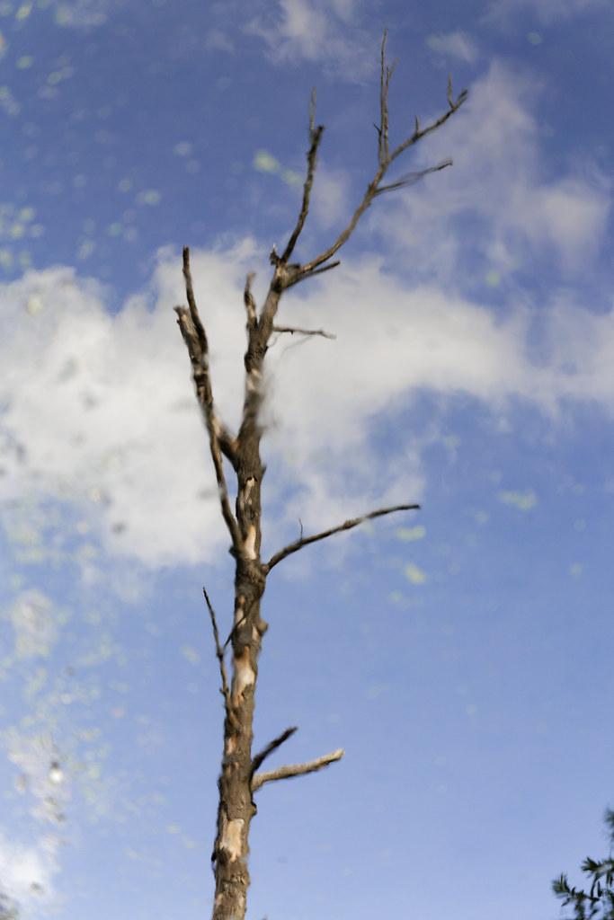 Baum im Fließ