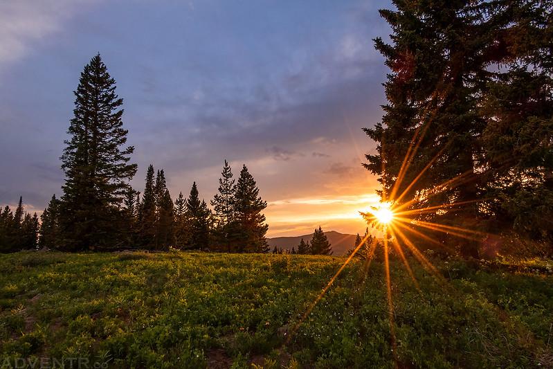 Evening Sunstar