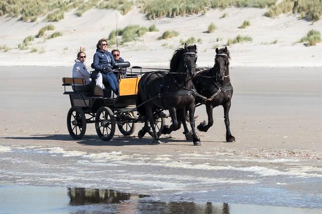 Ameland: het strand bij Nes.