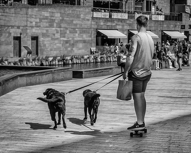 Roller Dogs.