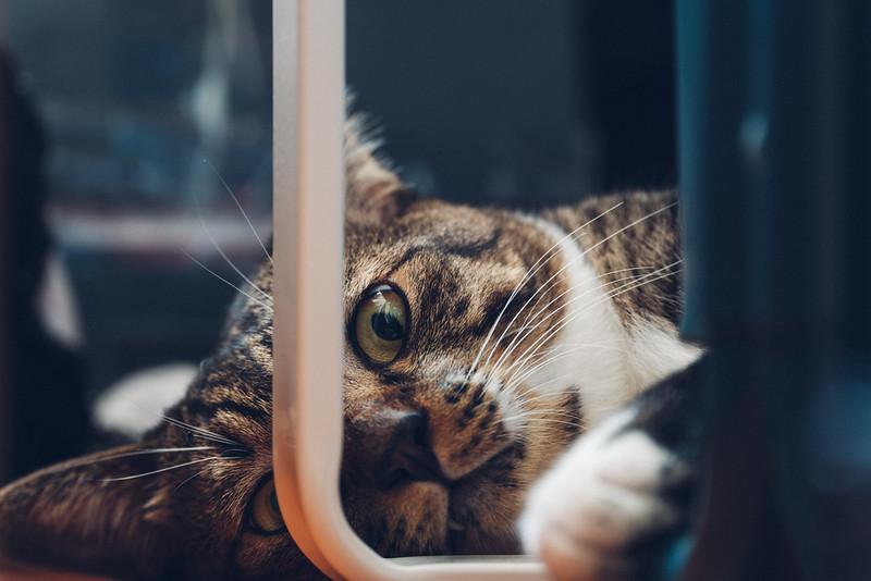 小隻仔 Cat
