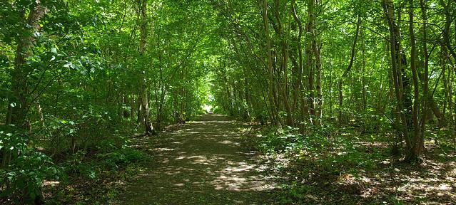 Chambers Farm Wood