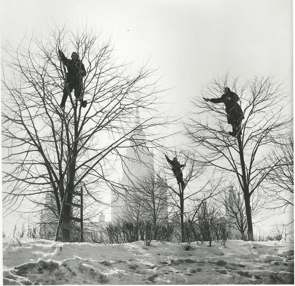 1960. «Грачи прилетели». Весна в парке МГУ