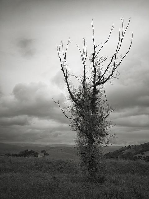 Tree of Dreams at Santa Teresa