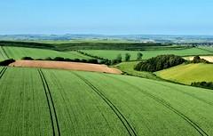 South Dorset Ridgeway and Maiden Castle - June 2021