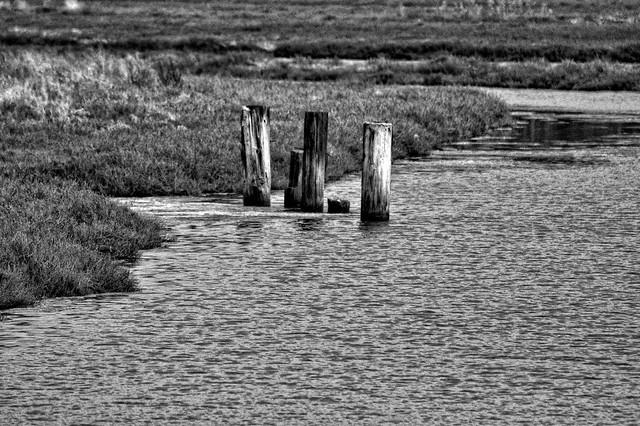 Old Dock Posts