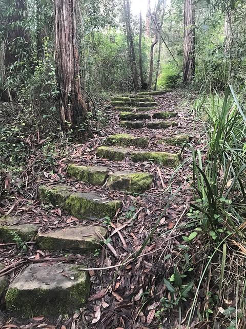 Blue Gum Creek walking track