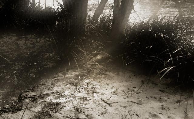 Near a stream