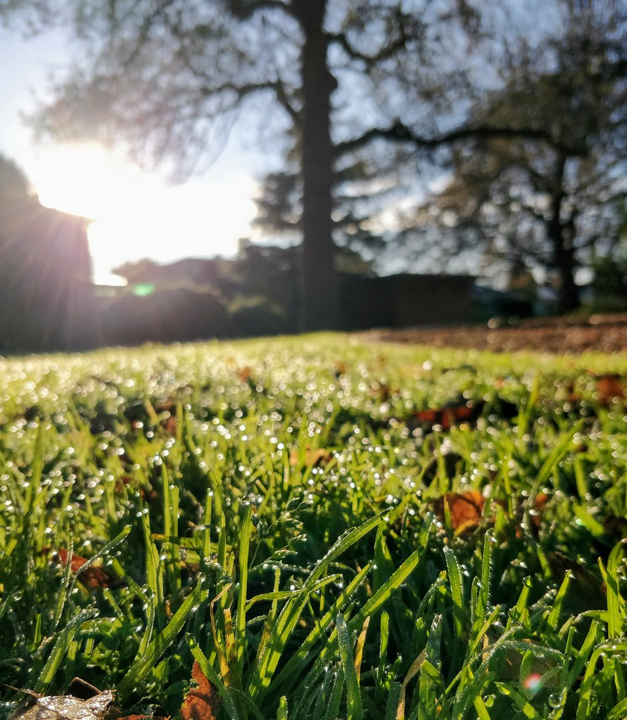 Dewdrops on the grass and Southern Winter Solstice morning sun at Wattle Grove Reserve