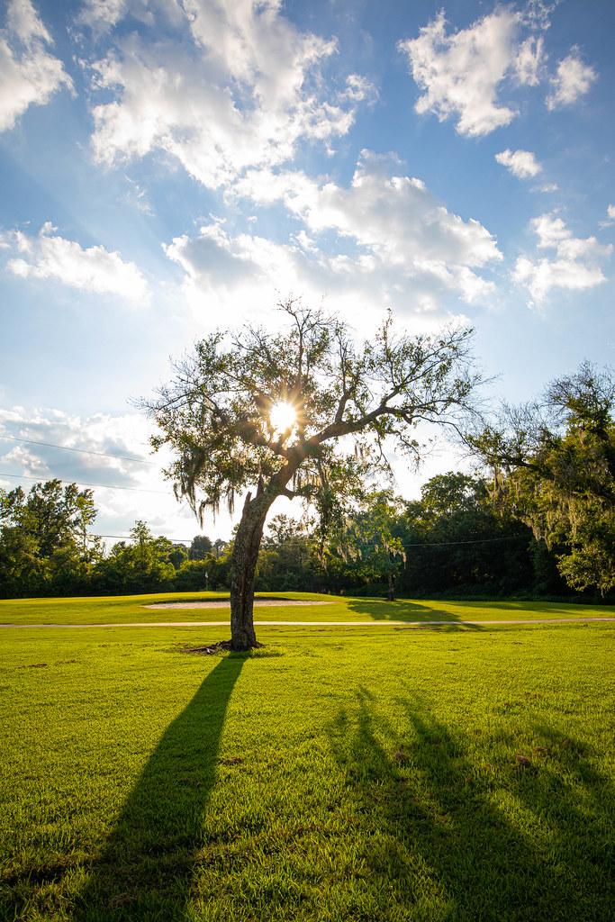 Sunlight behind a tree