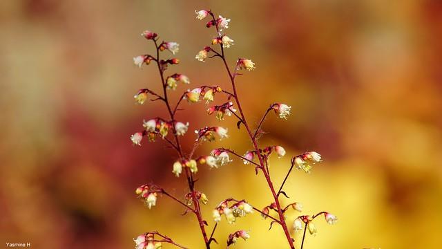 9864 - Nature