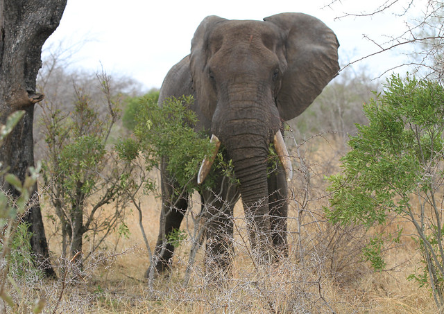 Amazing Elephant in South Africa
