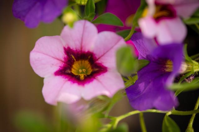 Little pink blossoms
