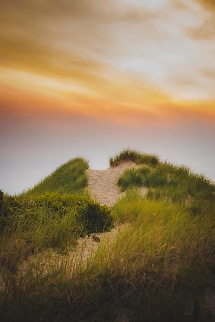 Dune II - The Sequel