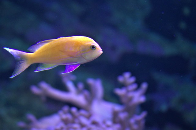 TROPICAL FISHES. 7PECES TROPICALES.7