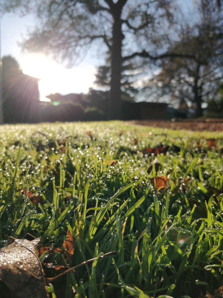 Dewdrops on the grass and Southern Winter Solstice morning sun at Wattle Grove Reserve - original