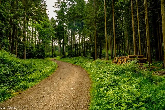 Unterwegs im kühlen Wald