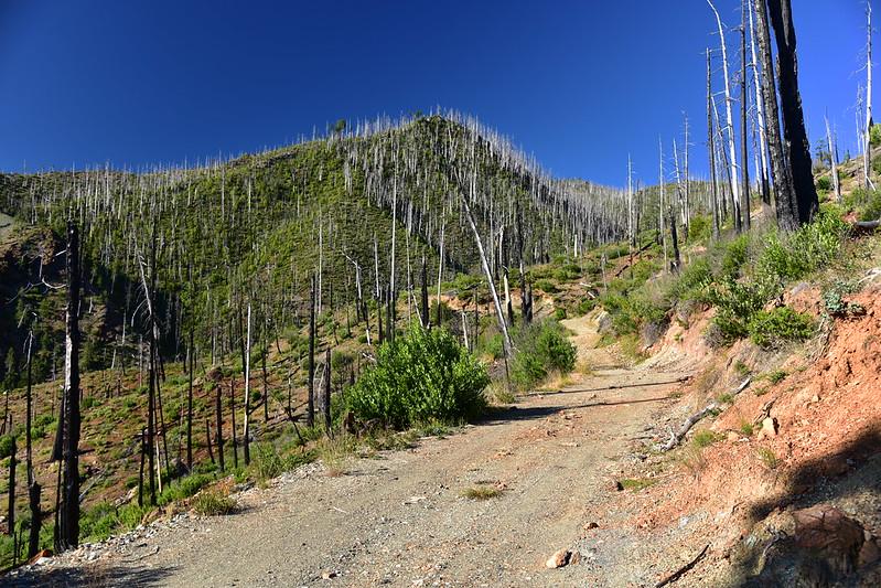 Road 087 to Chetco Pass