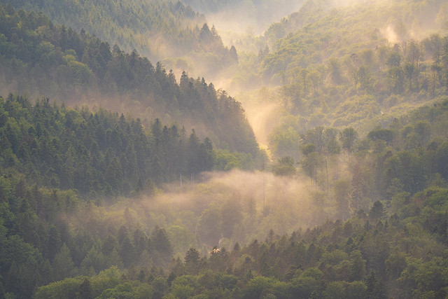 The Waldprecht Valley in the northern Black Forest after a summer shower