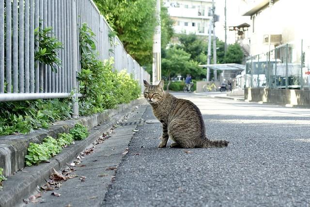 Today's Cat@2021−06−21
