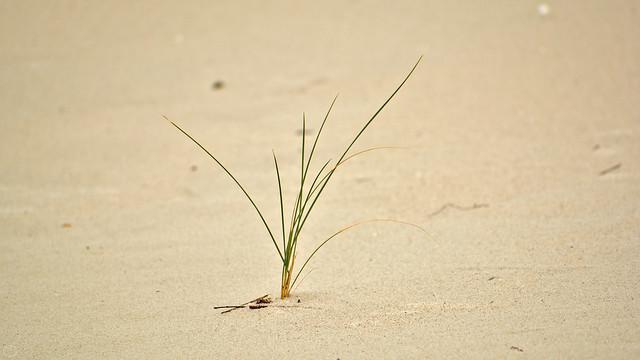 solitude grass