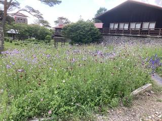 Seisen-ryo flowers