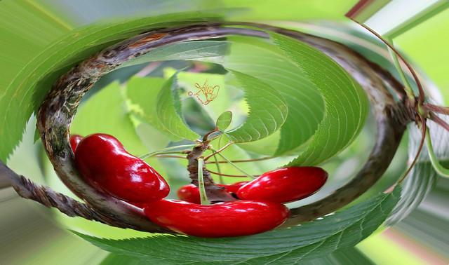 Cherries Galore. Macro and stereoscopic photo by #WhiteANGEL