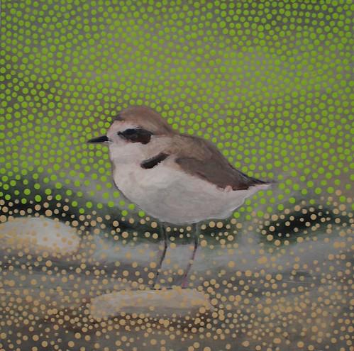 Devereux Slough Birds (2013-16)
