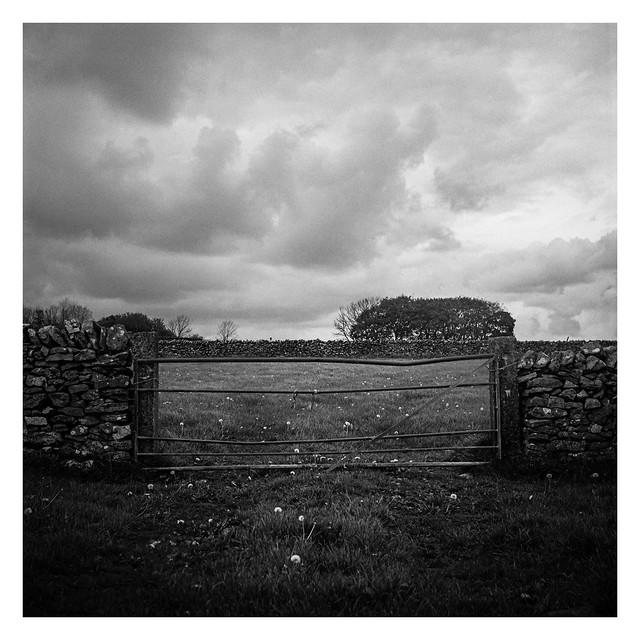 Meadow gate