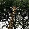 World Giraffe Day - Rhino River Lodge