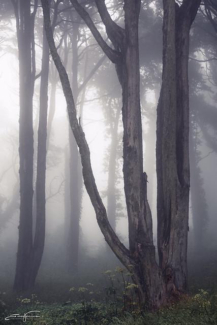 Dark and fog