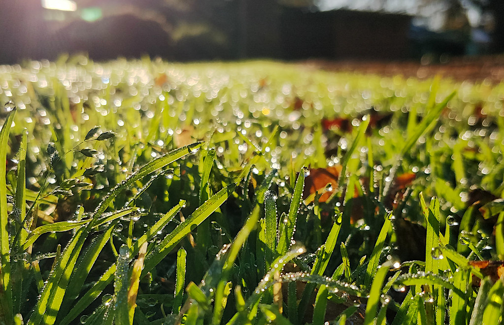 Dewdrops on the grass and Southern Winter Solstice morning sun at Wattle Grove Reserve - close