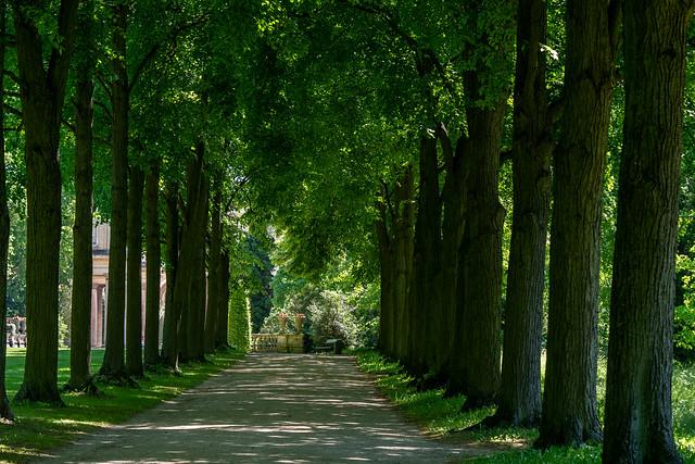 Potsdam, Park Sanssouci: Krim-Lindenallee - Crimean linden allée