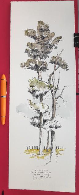 Valorio. Un sitio estupendo para tomar una cerveza mientras se dibuja un poco de bosque .