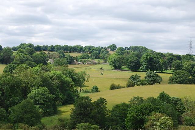 Greenery around Priestley Green