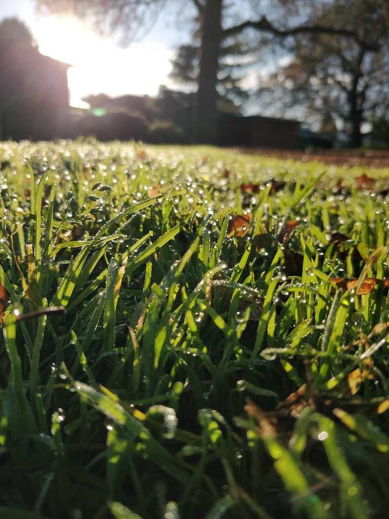 Dewdrops on the grass and Southern Winter Solstice morning sun at Wattle Grove Reserve - close - original