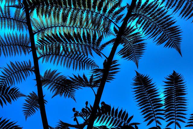 Under a tree fern ©twe2021☼