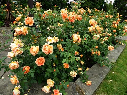 Churchyard Blooms