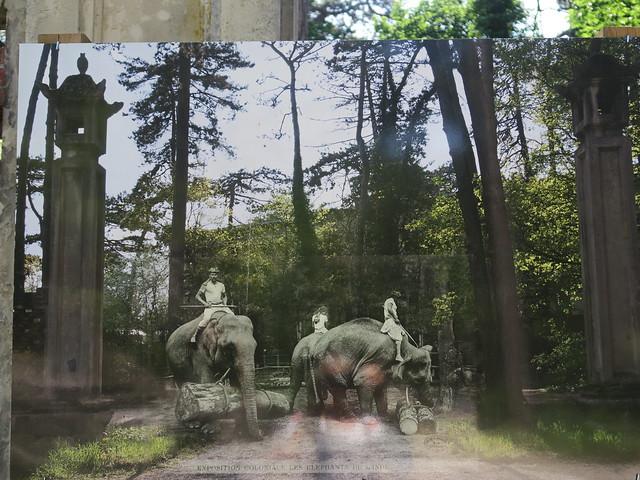 Exposition coloniale de 1907, les éléphants de l'Inde - Jardin d'agronomie Tropicale de Paris, Bois de Vincennes, Paris XIIe
