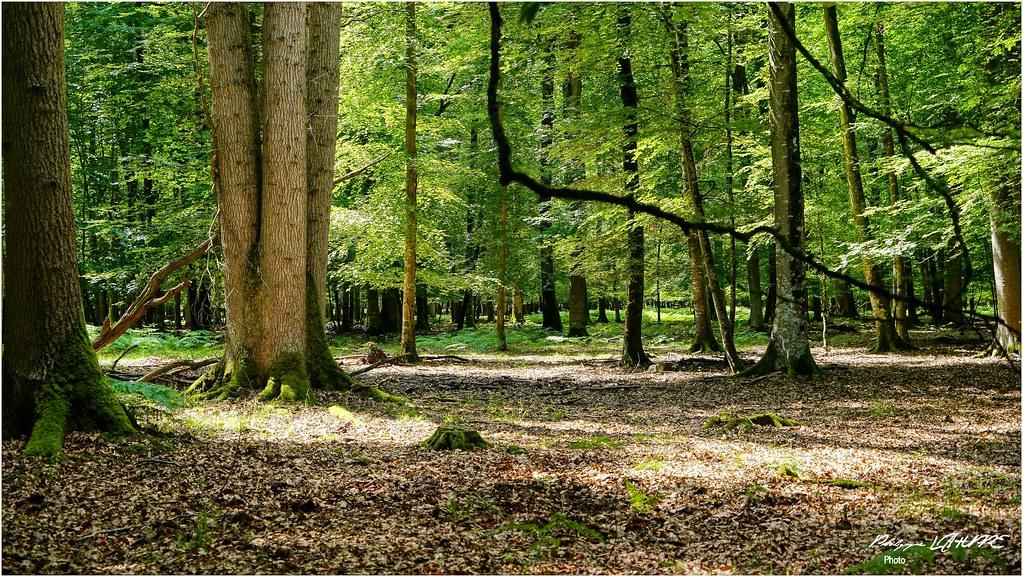 Dans la forêt de Beaumont le Roger