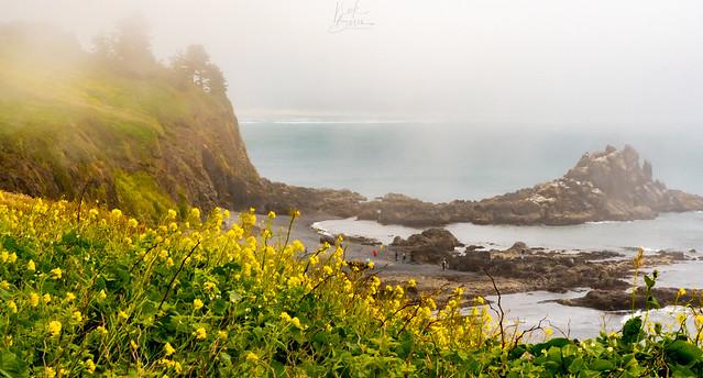Coastal Landscape at Yaquina Head