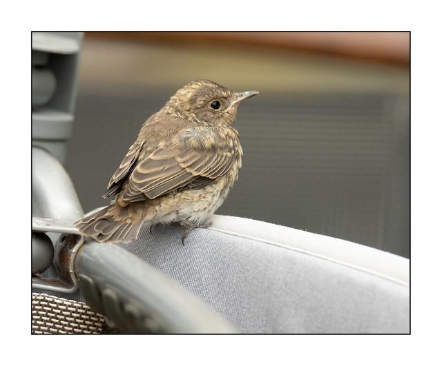 Hungry little bird