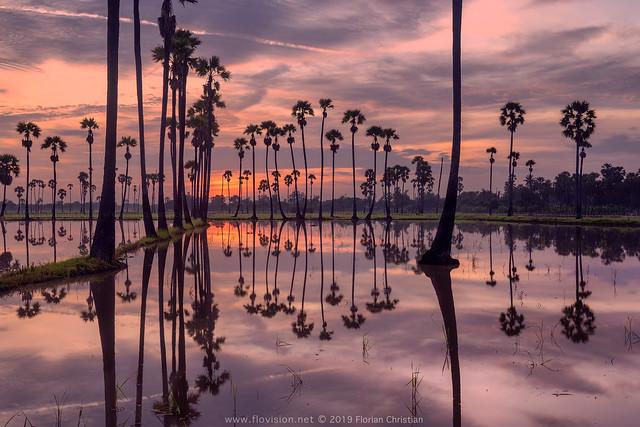 magic dawn. sugar and rice III, Thailand